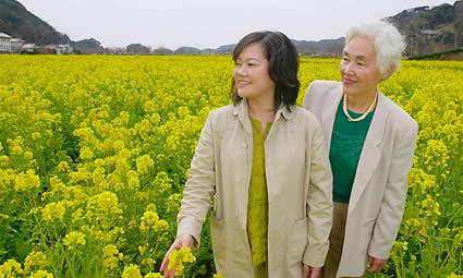 いちめんの菜の花畑