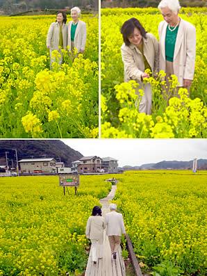 菜の花に埋もれて歩きます