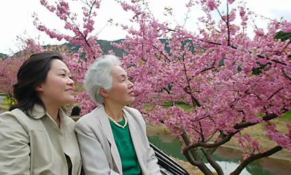 手が届きそうな、みなみの桜