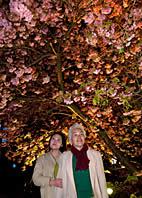 幻想的な夜桜の下で。